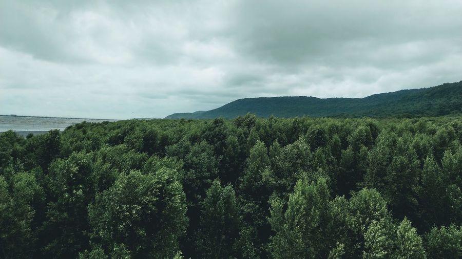 Tree Sea Rural