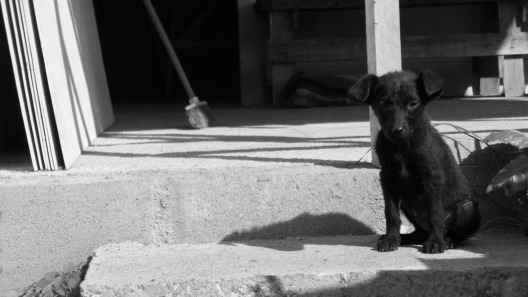 Dog Aceituna Hijuelas Pet Portraits