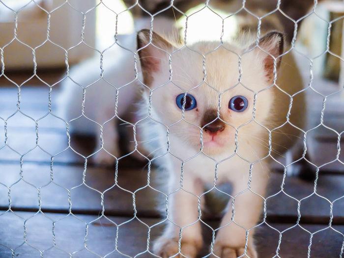 Portrait of cat seen through chainlink fence