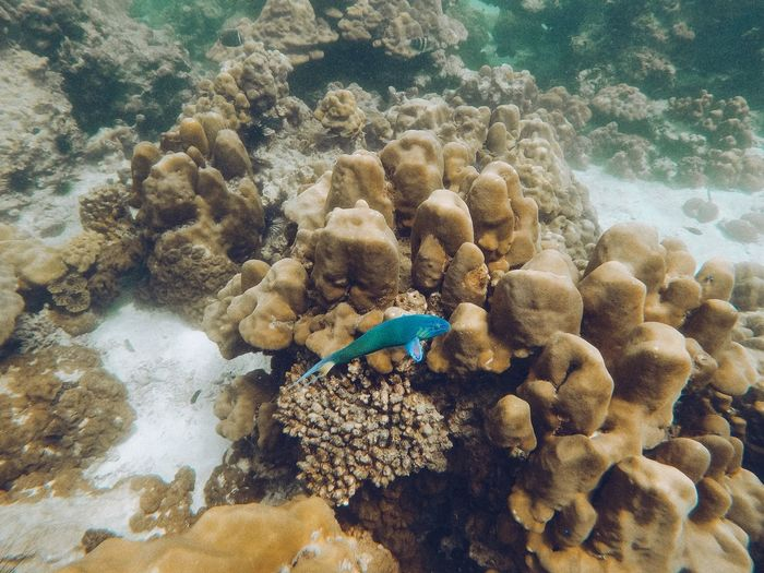 Blue fish Underwater Sea Animals In The Wild Animal Wildlife Water Sea Life UnderSea Marine Coral Animal Themes Invertebrate Animal Nature No People One Animal Vertebrate Outdoors Beauty In Nature Day Reef