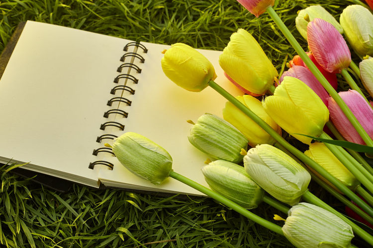 Close-up of tulips and book on field