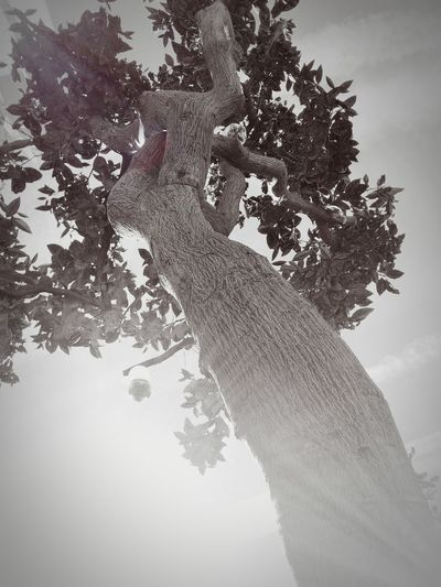 Tree Of Life Light And Dark Significance Symbolic  Interpretive Growth Development Hope Clinging To Life Stages Of Life Colourless Outdoors Garden Nature Sunlight Shadow No People Beauty In Nature Bestsellers