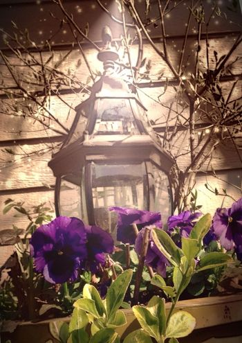 The spot light is on you and its your day to shine. Eye4photography  Flowers,Plants & Garden architectural Architectural Elements Garden Architecture