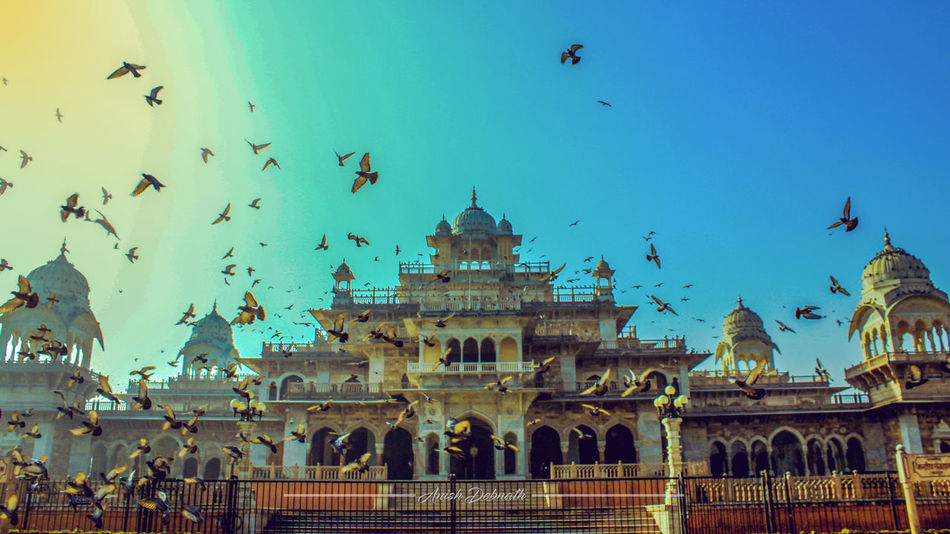 India Indian Tourist Places Jaipur Rajasthan Tourism Albert Hall Museum Animal Themes Architecture Bird Building Exterior Built Structure Canon Canon Photography Clear Sky Flock Of Birds Incredible India Large Group Of Animals Low Angle View No People Outdoors Palace Pigeon Rajasthan Rajasthandiaries Sky