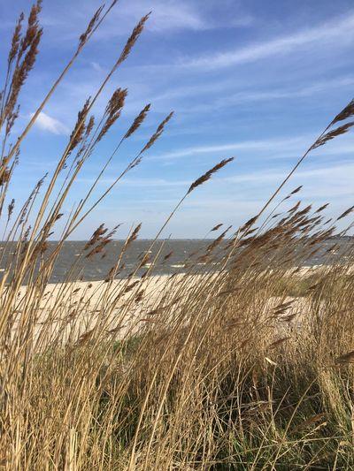 Nature Sylt Strand Dünen Nordsee