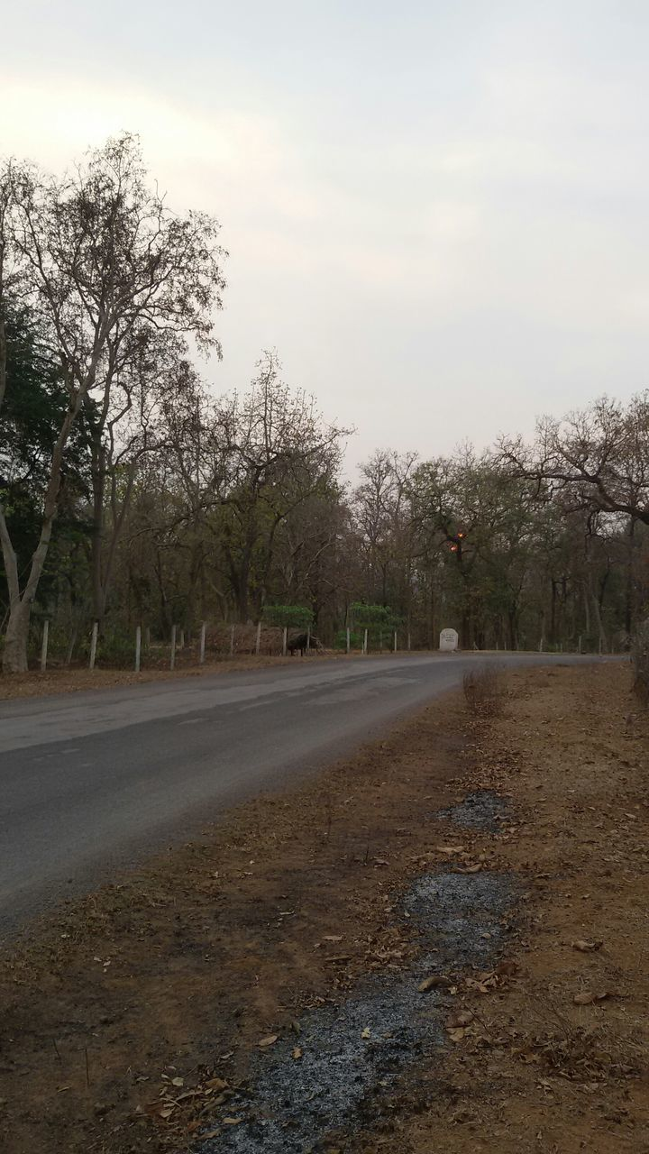 tree, road, the way forward, sky, tranquility, no people, tranquil scene, nature, outdoors, day, scenics, landscape, beauty in nature, bare tree