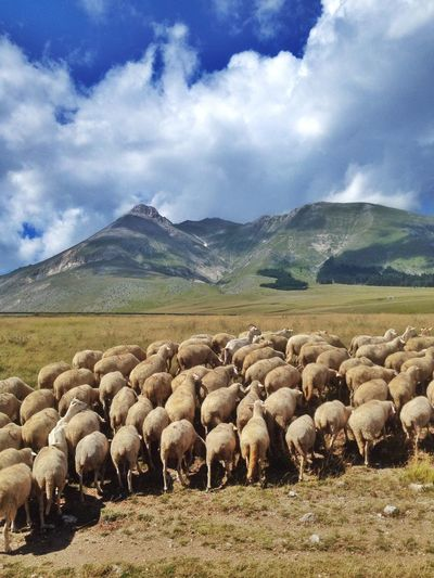 Campo Imperatore, Abruzzo, Italy Edge Of The World Mountains Green Sheep Clouds And Sky Sky