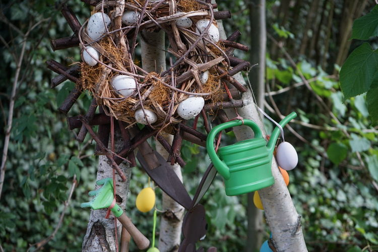 Close-up of eggs hanging on tree
