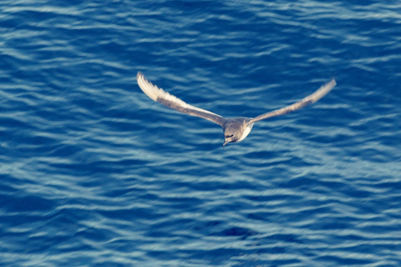 HIGH ANGLE VIEW OF SEAGULL FLYING