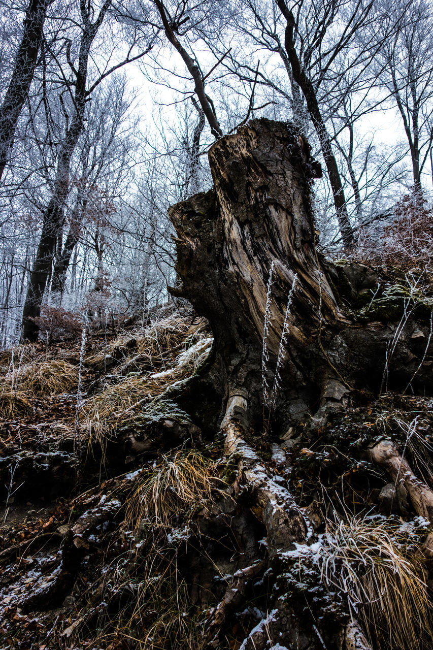 bare tree, tree, nature, forest, branch, day, tranquility, no people, beauty in nature, outdoors, winter, landscape, cold temperature, scenics, tranquil scene, snow, tree trunk, water, sky