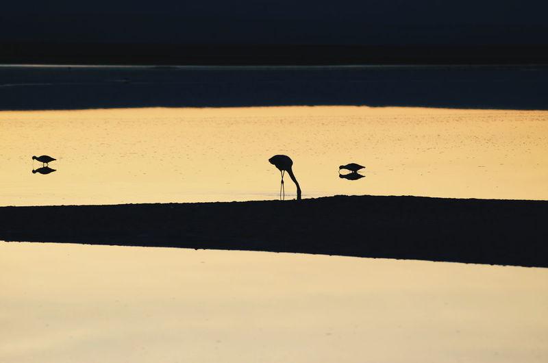 Silhouette birds on shore against sky during sunset
