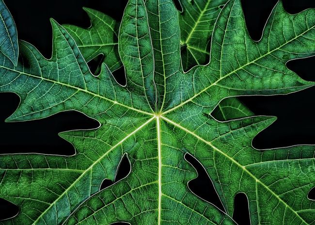 Texture Green Color Leaf Plant Part Nature Plant Natural Pattern Growth Leaf Vein Beauty In Nature Close-up No People Pattern Outdoors Fragility Environment