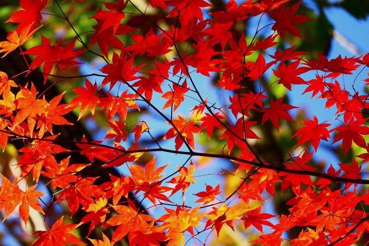Autumn Plant