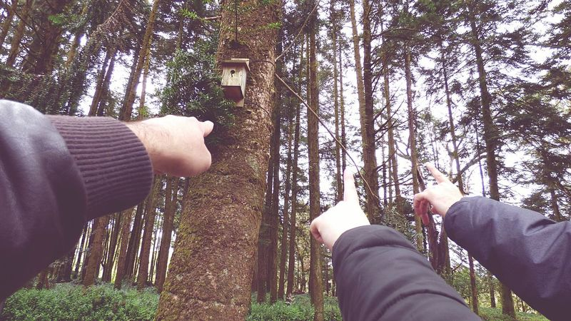 The 3 Fingers Pointing The Way for a Bird House on the Tree Portugal Forest Park Telling Stories Differently Forest Photography Eye For Photography The Week On Eyem Eye4photography  Forest Nature Trees EyeEm Gallery EyeEm Nature Lover Looking Up Friends Friendship Telling Stories Differtenly