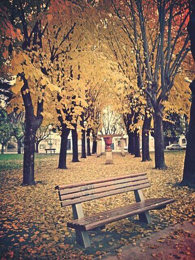 Plaza Otoño ♡♡