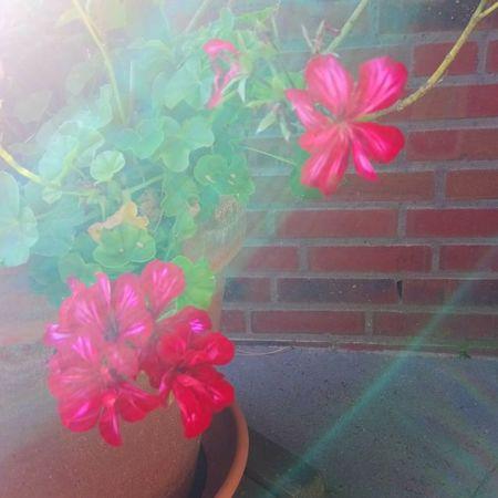 Petal Pink Color