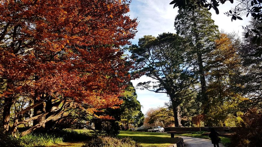 Last tint of autumn at blue mountains... Tree Growth Nature Outdoors Day Sky Low Angle View No People Branch Beauty In Nature Blue Mountains Leura Everglades Garden Autumn Quietness Serenity Australia Katoomba