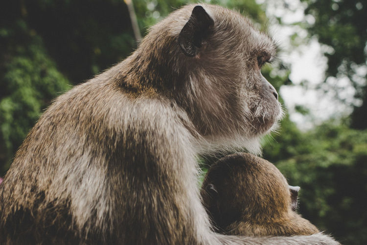 Family Monkeys Motherhood Animal Themes Animal Wildlife Animals In The Wild Bear Close-up Day Focus On Foreground Mammal Nature No People One Animal Outdoors The Week On EyeEm