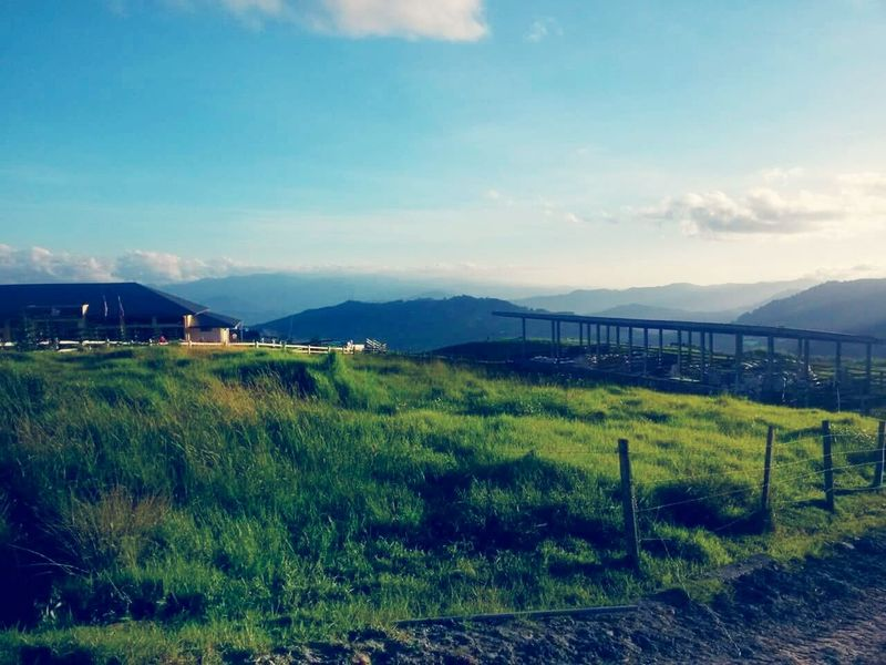 the farm Kundasang, Ranau Sabah Cowfarm Mountain View First Eyeem Photo