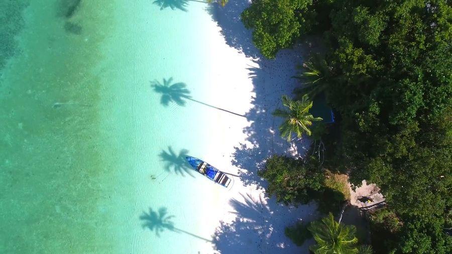 Beach Landacape Seascape Nature EyeEm 2018 EyeEm Best Shots EyeEm Nature Lover EyeEM Beach Photography Eyeem Great Outdoors 2018 Outdoors Tree Water Palm Tree Sky