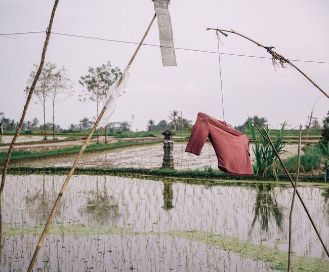 Clothes drying on farm against sky