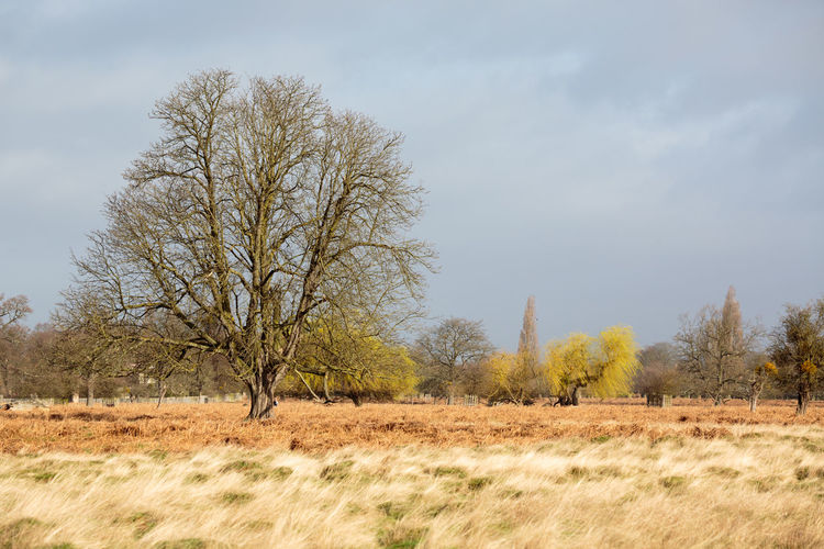 Bushy Park in Early Spring Tree Plant Field Land Sky Nature Day Outdoors Spring Bushy Park