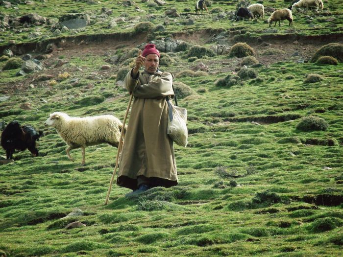 Haut Atlas Green Nature Dry Grass Freedoom  Photography Cold Morning Loneliness Greenman Maroc Travel Trip Standing Guard
