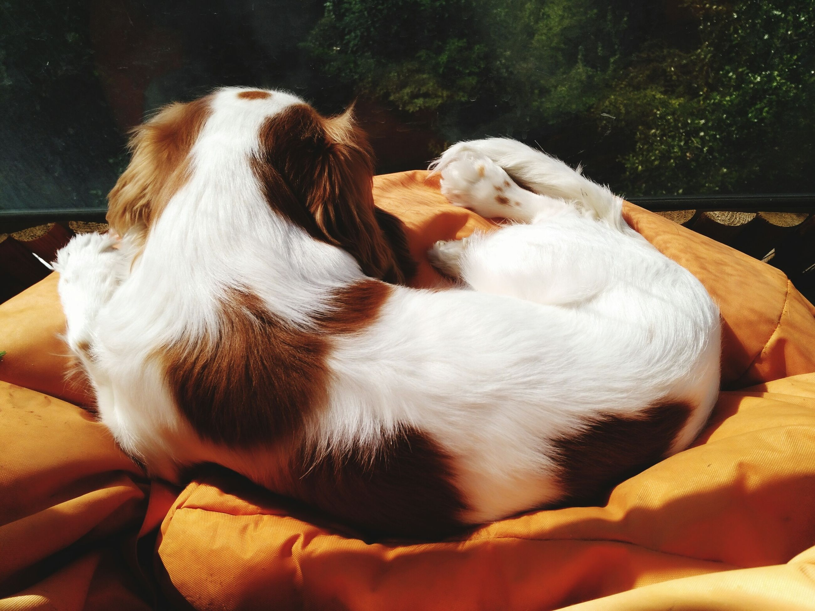 animal themes, domestic animals, pets, one animal, dog, mammal, animal head, resting, relaxation, day, zoology, pampered pets, loyalty, no people, animal hair, animal