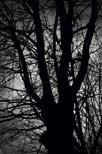 Bright Mystery Into The Light Tree Blackandwhite darkness and light Nature EyeEm Nature Lover EyeEm Best Shots EyeEm Masterclass Beauty In Nature Check This Out Lookingup Outside EyeEm Selects Focus On Foreground Silhouette Pattern Dark Black Focus On Shadow Full Frame Detail Textured  Long Shadow - Shadow