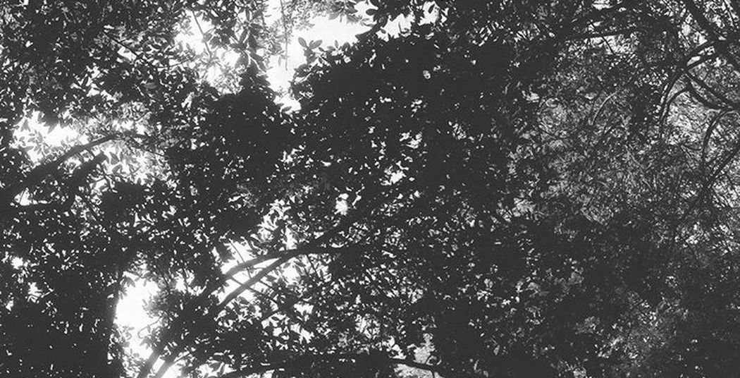 EyeEm Tree Low Angle View Growth Branch Nature Scenics Day Beauty In Nature Panoramic Panorama Outdoors No People Blackandwhite Black & White Black And White EyeEm Nature Lover Eye4photography  Eye4black&white