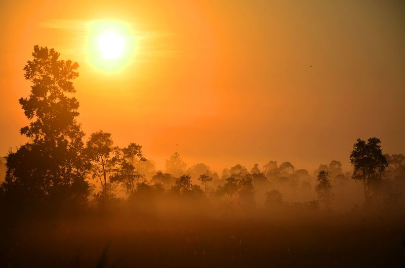 sunrise with fog Orange Color Tree Sunset Multi Colored Fog Tree Area Forest Rural Scene Sunlight Gold Colored Beauty Atmospheric Mood Cumulus Romantic Sky Atmosphere Dramatic Landscape Moody Sky Heaven Forked Lightning Meteorology Overcast Treetop Sky Only Dramatic Sky Streaming Pinaceae Pine Woodland Majestic Idyllic Pine Tree EyeEmNewHere