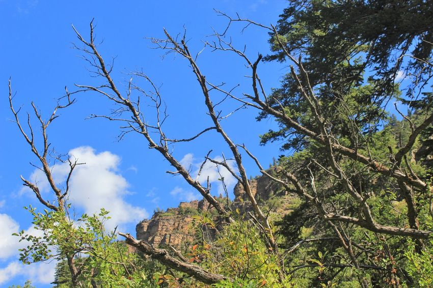 Tree Plant Sky Low Angle View Nature Branch Growth Day Tranquility Beauty In Nature No People Clear Sky Scenics - Nature Green Color Mountain Blue Outdoors Land Tranquil Scene Non-urban Scene