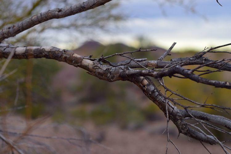 Branches Macro Photography Desert Colors Bokeh Photography Tree Nature Macro Desert Bokeh Nature