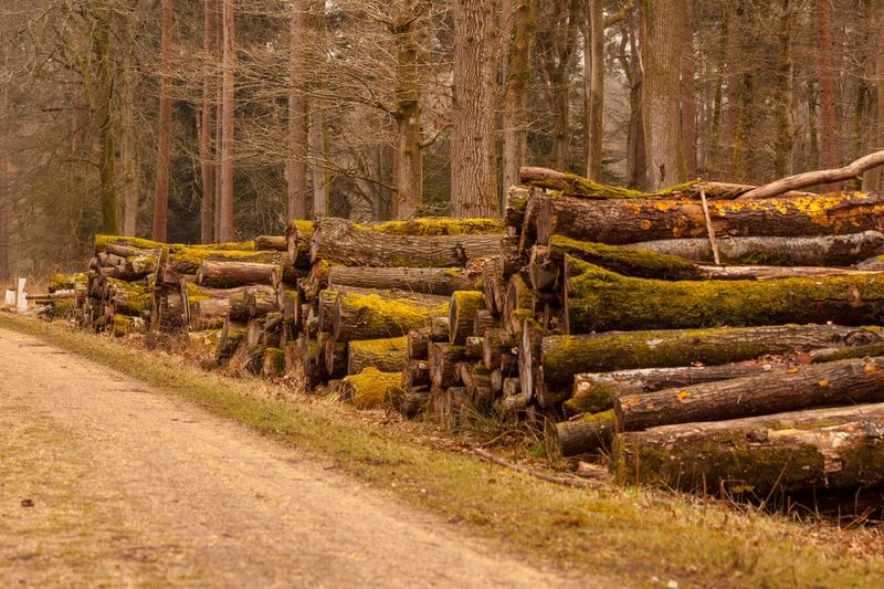Deforestation On The Road To Deforestation Track Nature Will Survive Moss Covered Trees Log Pile Logs Deforestation Nature Rural Scene Outdoors Beauty In Nature Tree Day