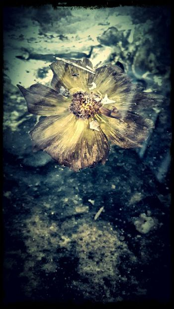 Adrift Saturated Colours Rain Soaked Translucent _Petals Water Logged EyeEm Nature Lover