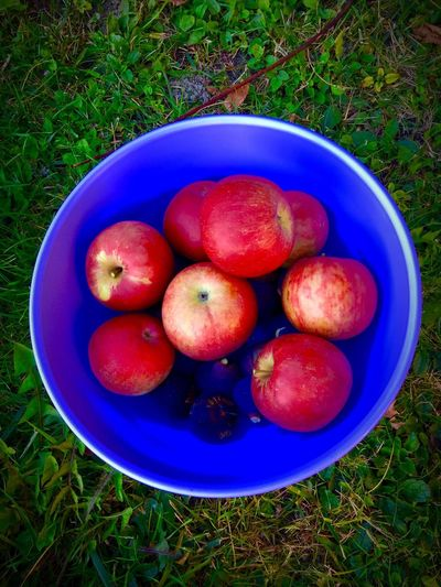 High Angle View Of Apples In Tub On Field