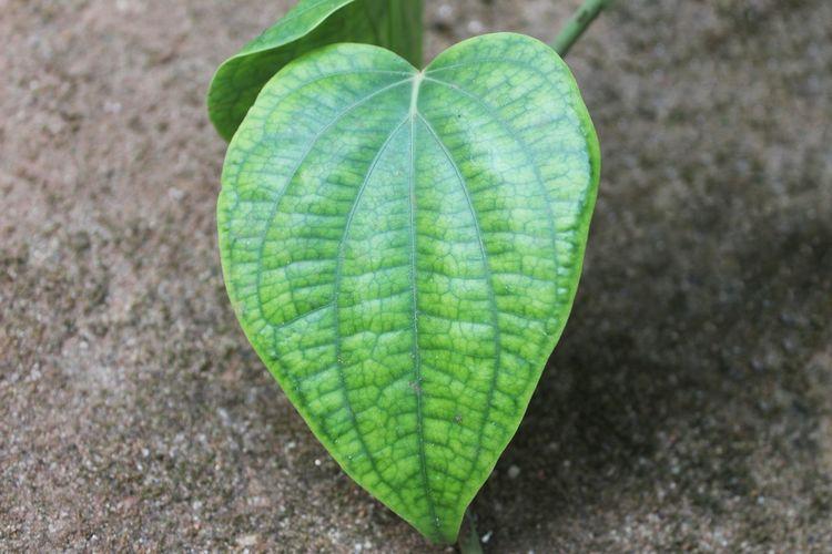 Leaf Love Heart