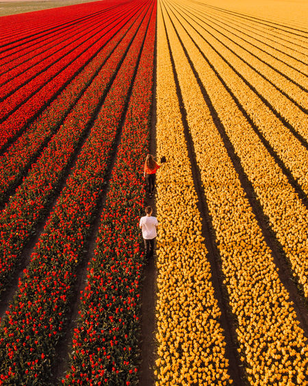 High angle view of people standing in flower farm