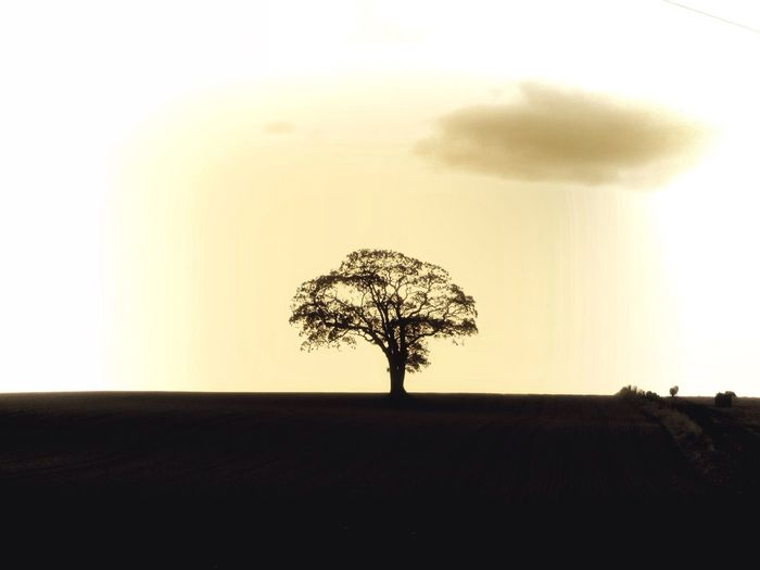 Solitary TreePorn Eye4photography  Landscape_Collection Landscape