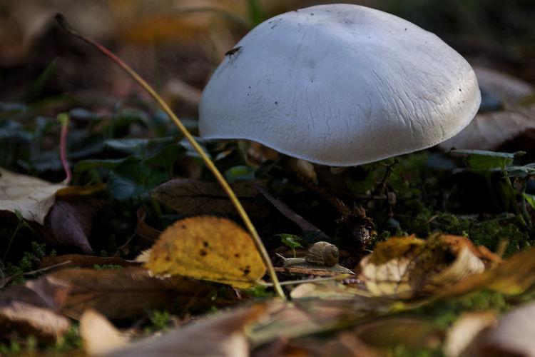 snail, mushroom