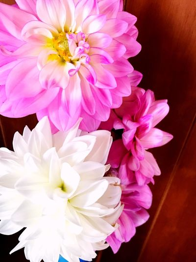 White Color Pink Color Daria Fresh Flower