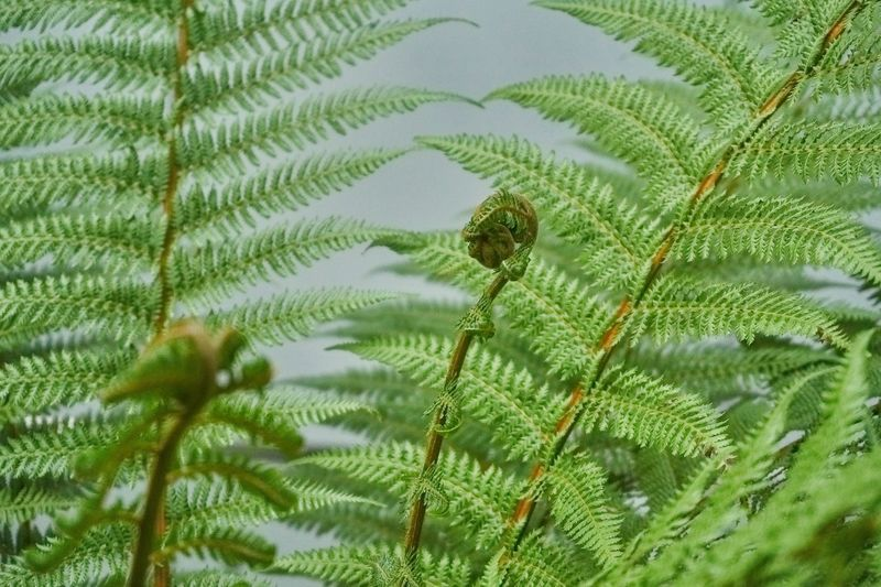 Animal Animal Themes Animal Wildlife Animals In The Wild Beauty In Nature Close-up Coniferous Tree Day Fern Fragility Green Color Growth Leaf Nature Needle - Plant Part No People One Animal Outdoors Pine Tree Plant Plant Part Selective Focus Tree