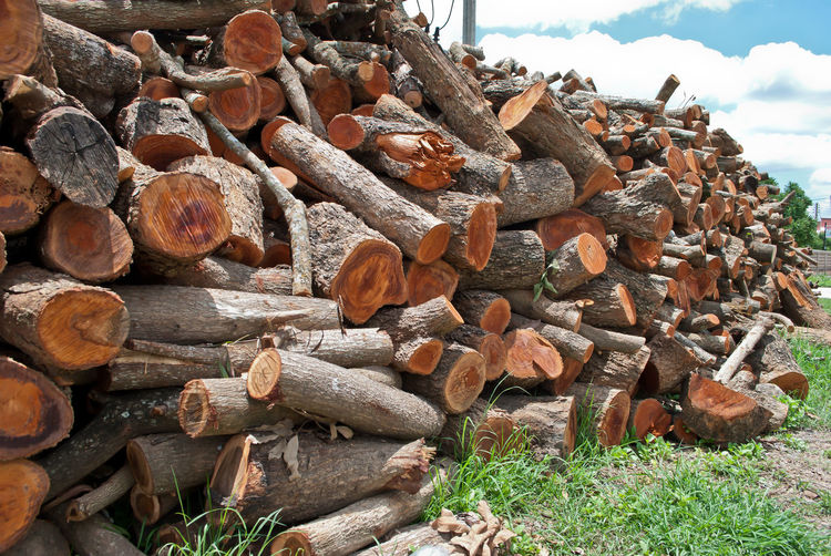 Abundance Brown Close-up Deforestation Environmental Issues Firewood Heap Large Group Of Objects Log Lumber Industry Nature No People Outdoors Stack Timber Wood - Material Woodpile