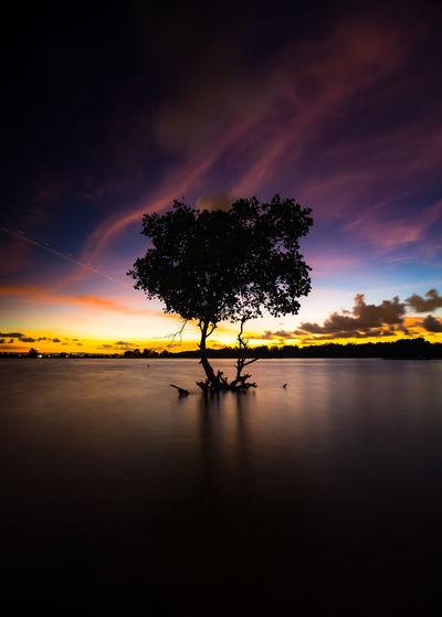 Beautiful Sunset Bali Sunset Landscape Longexposure Earthpix Awesomeearth Jaw_dropping_shots Splendid_earth Sunset_madness Sunset_stream Sunset_vision Beautifuldestinations Water Palm Tree Lake Reflection Silhouette Horizon Over Water