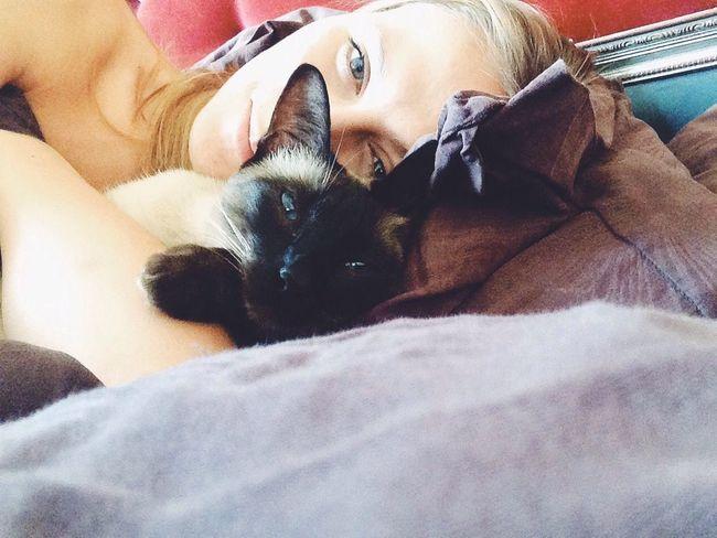 Blue Eyes Cat Morning Lazy Day