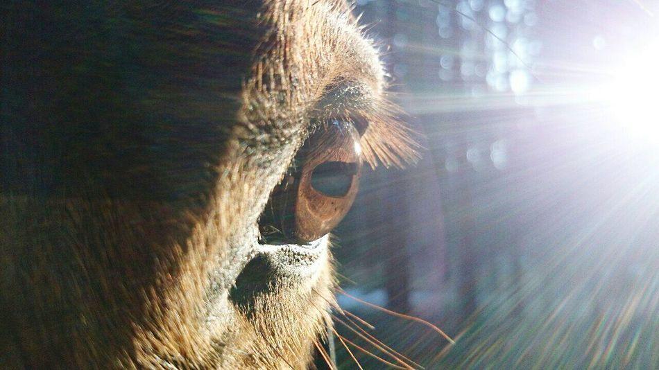I'll never forget you. Horse Horse <3 Eye Horse Eye MyLove❤ Love ♥ Horse Life HorseNAround Horselove Horsestagram Horsefollowers MyBoyfrirend♡ Imissyou MyLittlePony Goalkeeper