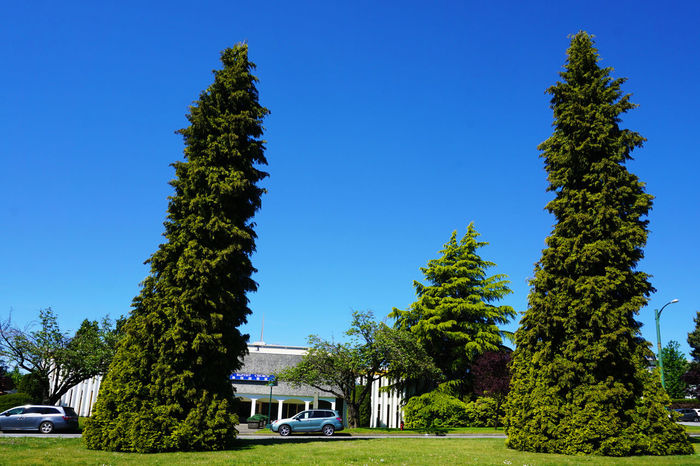 2016 Blue Canada City Clear Sky Nature Tree Vancouver カナダ バンクーバー
