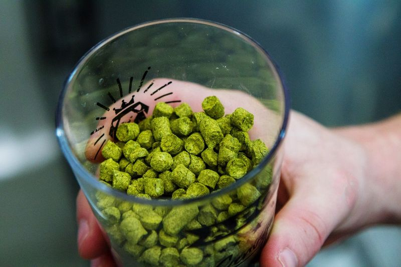 A cup with hops grains Beer Hops Beercraft Human Hand Hand Human Body Part One Person Green Color Healthy Eating Holding Personal Perspective Lifestyles Close-up High Angle View Body Part Unrecognizable Person Food Freshness Bowl Real People Food And Drink Finger Wellbeing