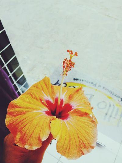 Taking Photos HDR Flower Color Portrait