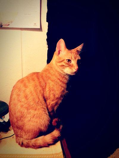 Orange By Motorola Cat♡